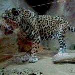 Field Trip: Ark Avilon Zoo