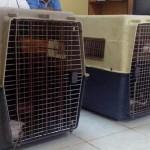 Tiamzon's Pets