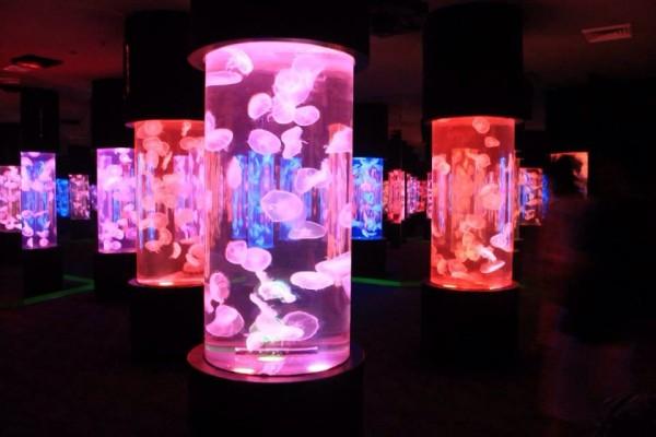 Jellies-exhibit